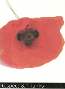 POPPY for Remembrance Day